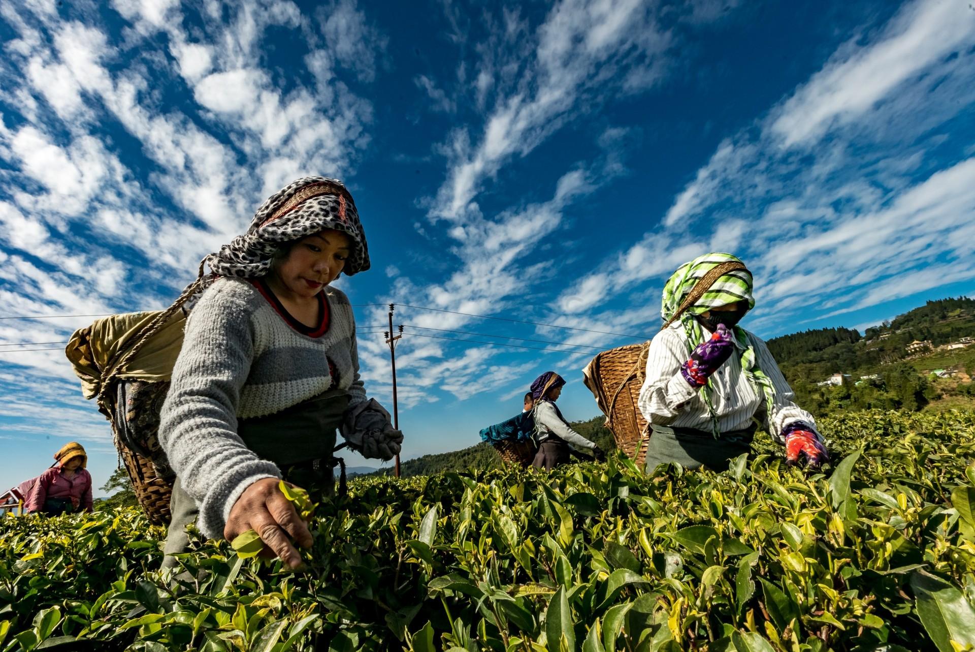 Norge må øke støtten til FNs Grønne Klimafond og FNs Tilpasningsfond