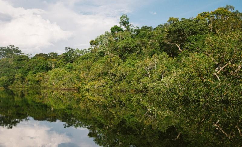 Regnskogen er «verdens hjerte»
