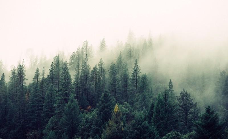 Økning i regnskogmidler, men ingen helhetlig bærekraftig skogpolitikk